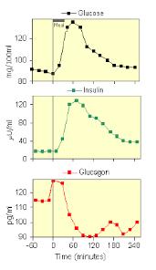 Осложнения диабета и типа Сахарный диабет 2 типа курсовая работа