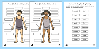 Human Body Parts Labelling Activity