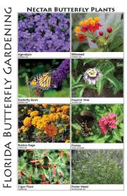 Small Picture Butterfly Garden Ideas Garden Design Ideas