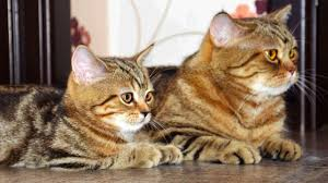 cats and kittens pictures. Brilliant Kittens Cute Kittens And Cats Together Throughout And Pictures