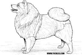 Small Picture Best Pomeranian Coloring Pages Contemporary Coloring Page Design