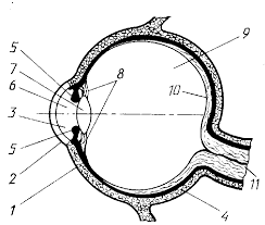 Дефекты зрения глаз и очки реферат