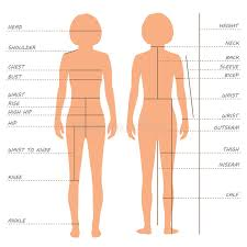 Body Measurements Size Chart Stock Vector Illustration Of