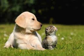 puppy and kitten. Plain Puppy Puppy And Kitten Laying On The Grass Intended Puppy And Kitten