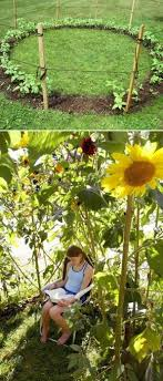 Grow a Sunflower House as Kids Playhouse