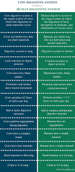 Human Digestive Enzymes Chart Difference Between Cow And Human Digestive System