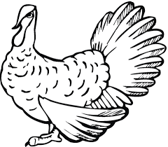 wild turkey coloring pages. Beautiful Pages Wild Turkey Coloring Page On Turkey Coloring Pages R