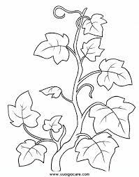 Disegni Da Stampare E Da Colorare Natura Il Fiore I Fiori