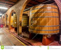 oak wine barrels. cellar wine oak barrels a