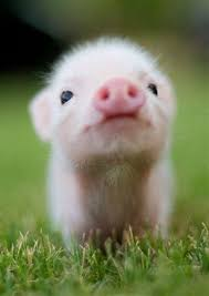 really cute baby animals pictures. Nobody Can Resist The Cuteness Of Baby Animals They Are Curious Naive And Sometimes Funny Just Like Our Kids Hardened Person If You Scroll On Really Cute Pictures