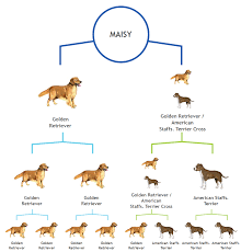 Dog Color Genetics Chart Breed Tests For Dogs Fact Or Fiction Grand Avenue