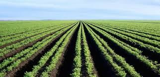 Best Image Of Agriculture