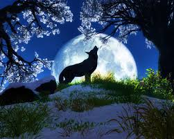 wolf howling at the moon wallpaper hd. Perfect Wallpaper Wolves Images Wolves The Masters Of World Wallpaper And Background  Photos Intended Wolf Howling At The Moon Wallpaper Hd A