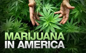current marijuana laws in florida