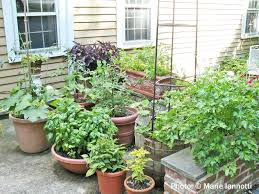 Kitchen Garden In Pots Vegetable Gardening In Containers And Small Spaces