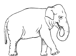 Small Picture Elephant Coloring Page Coolagenet