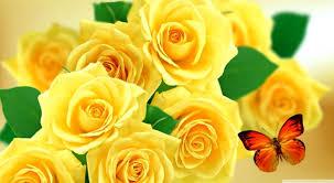 yellow rose desktop tablet
