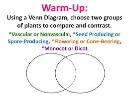 Venn Diagram Of Vascular And Nonvascular Plants Warm Up In A Paragraph Explain Why The Celery Turned Blue