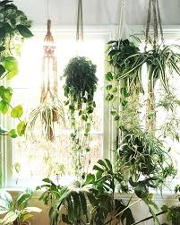 house plants. Hanging Indoor Plants Best Ideas On Plant House