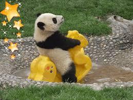 baby panda gif. Wonderful Panda Baby Pandas Panda GIF With Baby Panda Gif W