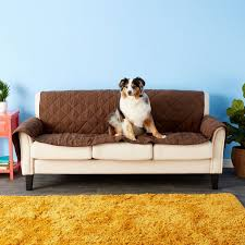 what pet owners need to clean and protect their furnishings according to experts