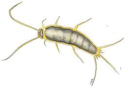 How To Handle Silverfish This Summer