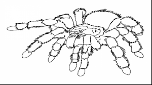 Small Picture Eric Carle Busy Spider Coloring Pages Coloring Coloring Pages