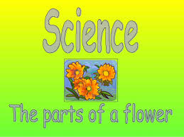 Ppt Flowers Biology Ppt On Parts Of Flower