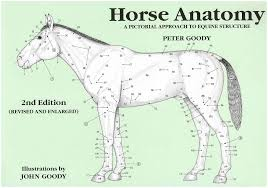 Horse Anatomy A Pictorial Approach To Equine Structure