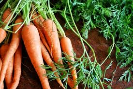 Image result for garden carrots