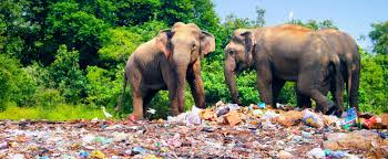 Plastikschulung und Recycling in Sri Lanka