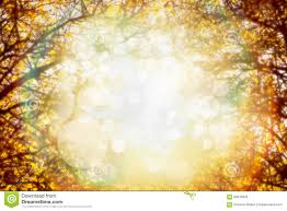 fall nature backgrounds. Autumn Foliage On Trees Over Sun Light In Garden Or Park. Blurred Fall Nature Background. Backgrounds K
