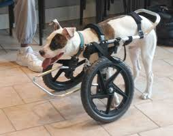 dog wheelchairs for front legs 9 best front wheel carts images on