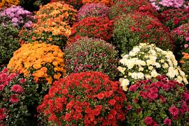 A Case For Planting Containers For Fall  Dirt SimpleContainer Garden Ideas For Fall