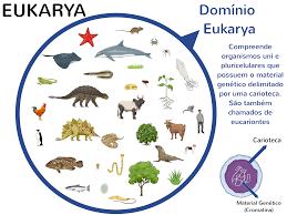 Resultado de imagen de Eucarias