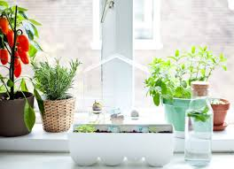 Indoor Kitchen Gardening Make Your Own Kitchen Micro Garden By Attaching The Planters To