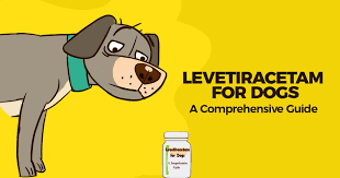 Levetiracetam For Dogs A Comprehensive Guide Simple Wag