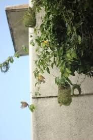 """prachi bhutada on Twitter: """"Little birds are making nests in my balcony &  father used it as a parental motivation lesson """"look how tirelessly they  work."""" #ChancePeDance… https://t.co/nx8nNBNG0I"""""""