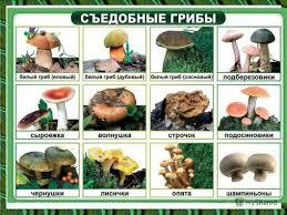 Презентация на тему В царстве грибов Царство грибов очень  10