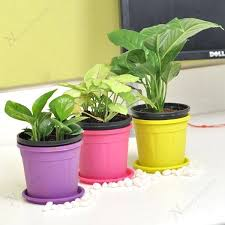 small plants for office. Plants For Office Desk Air Purifier Table Top My Small