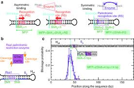 Restriction Enzyme Mechanical Footprint Mfp For Restriction Enzymes A Schematics Of