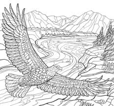 Americas Favorite Birds Coloring Page Downloads Cornell Lab Pub