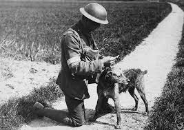Resultado de imagen de perro soldado primera guerra mundial