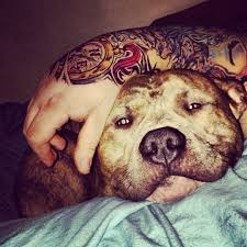 Tattoos And Pitbulls #handtattoo Photograph by Dustin Gregory