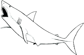 realistic shark coloring pages s9142 coloring pages shark coloring pages by coloring pages realistic shark coloring