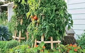 tomato trellis tomato cages