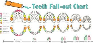 Teething Chart Babies When Do Baby Teeth Fall Out Diagram Unique Teething Chart For Babies