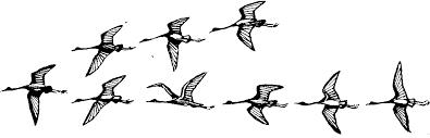 Реферат Перелеты птиц com Банк рефератов сочинений  Перелеты птиц Реферат