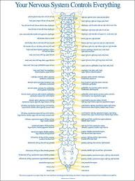 Spinal Nerve Chart Get Well Spine Health Chiropractic