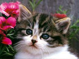 Download Cats Cute Cat And Kitten Cats ...